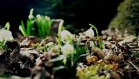 植物生长开花大合集