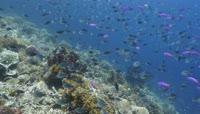 4K超清实拍高清海底世界海底游鱼乌龟视频