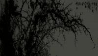 ST00444樱花树唯美梅花树水墨梅花花瓣淡彩中国风四季交替春夏秋冬水墨画