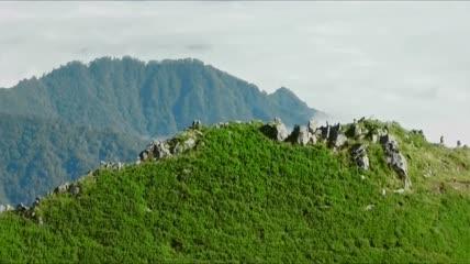 ST00958航拍陕西汉中羚牛高山群居动物
