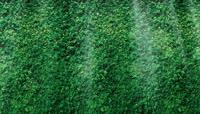 25\.绿色树