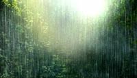 42\.热带雨林
