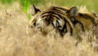 实拍高清动物世界视频