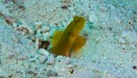 实拍精美海底世界各类鱼海素材视频