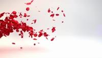 会声会影X8模板 唯美婚礼花瓣飘散粒子LOGO文字片头