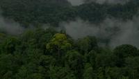 超高清绿色植物生长微距实拍视频