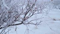 东北冬日雪景雪水小溪流淌高清视频素材