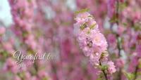 樱花盛开婚礼相册模板