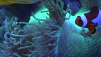 海底世界海底海洋生物视频素材