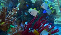 海洋水族馆海底世界