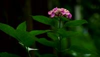 漫山遍地的春天的花朵视频素材
