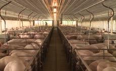 食品农场养猪场宣传片养殖业农业