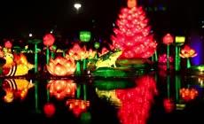 彩灯节游客观花灯高清视频
