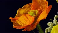 4K超清各种花朵特写实拍视频