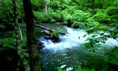 高清视频素材【森林小溪】山间溪流茂密绿色