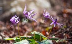 春季各种花朵开花延时摄影4K