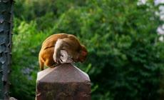旅游景区可爱猴子群玩耍嬉戏生活镜头