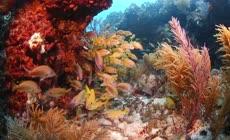 美丽的海底世界宣传视频