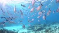 美丽的鱼群海洋世界
