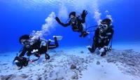 高清实拍海底世界视频素材