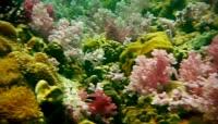 高清实拍海底世界视频素材1