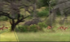 视频原始森林野生动物活动视频素材