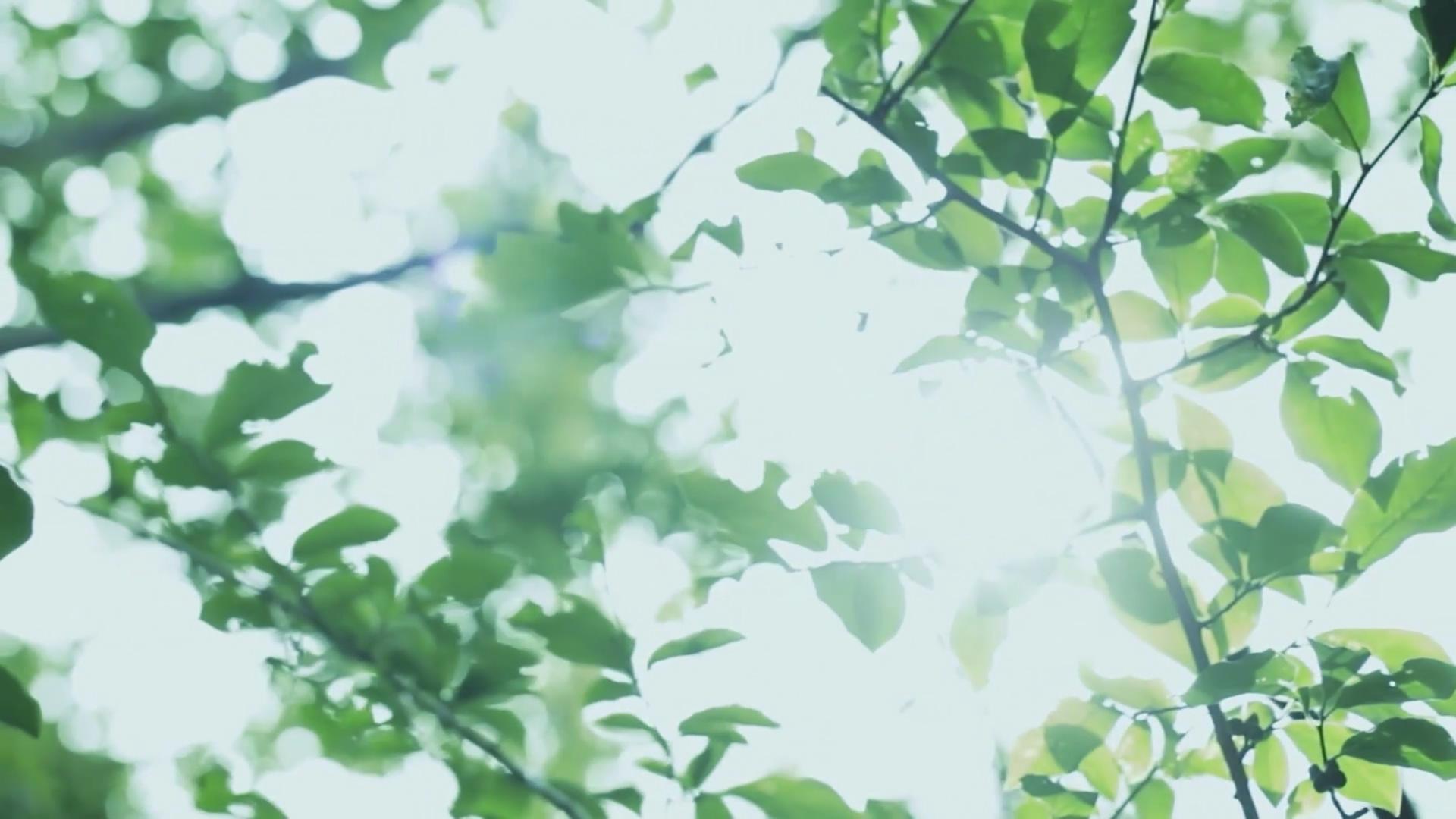 超唯美房地产园林大自然茶园茶叶小草清新空镜头高清实拍视频素材