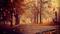 思念怀旧秋风落叶LED大屏背景视频素材