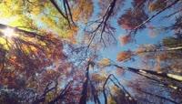 秋天回忆森林4K循环动态背景高清视频素材