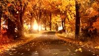 秋天的风景唯美乡间小路