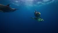 海豚世界唯美拍摄