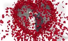 温馨浪漫韩式玫瑰婚礼相册AE模板