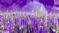 紫色薰衣草动态舞台背景原创led屏