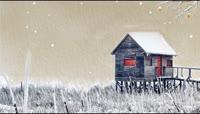 冬天雪地雪景飘雪森林冬至LED背景视频