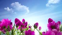 高清唯美红色花朵蓝天展示背景素材