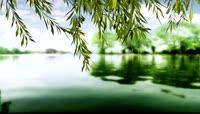 春风又绿柳树河岸中国风晚会舞台视频素材