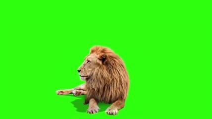 狮子绿屏抠像