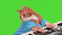 小猫咪弹钢琴