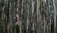 绿色自然生态环境大草原