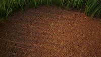 草原参天大树生长结果植物生长