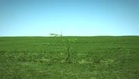 草原小树生长植物生长