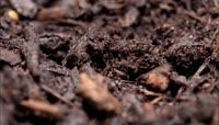 破土而出茁壮成长生命种子发芽植物生长延时拍摄重生开场片头【精品】