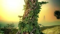 树绿藤生长