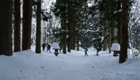2K森林雪景