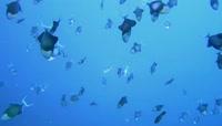 海底世界鱼类大全【你没有见过的鱼2】