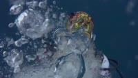 海下拍摄海底动物世界鱼群稀有鱼类