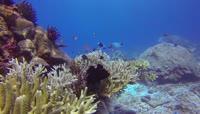 印度尼西亚鲨鱼海龟潜水水下探索