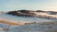 冬季放牧高清实拍视频素材