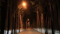 城市街道树木四季变化