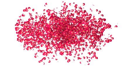 玫瑰花瓣汇聚爱心情人节表白视频素材